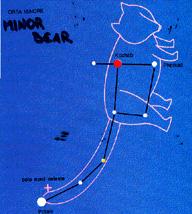 minorbear.jpg